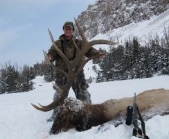 368-bull