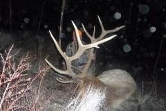 2014 Elk Hunts