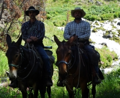 cowboys-and-mules