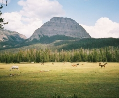 our-horses-in-pendergraft-meadows