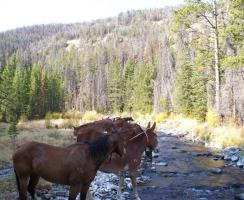 horses-watering-2008